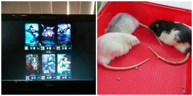 League of Legends, ratten,