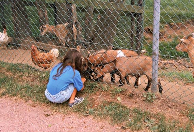 Tag: liefde voor dieren