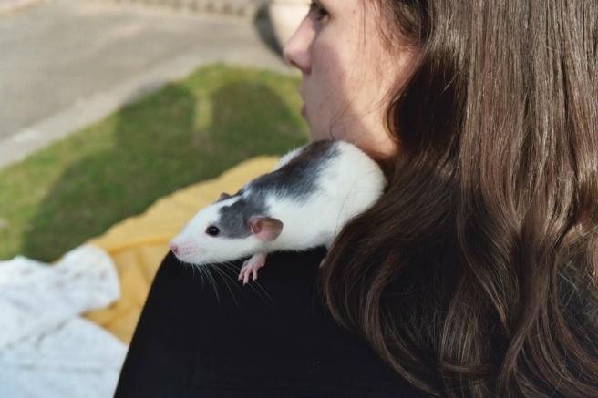 sunshine_blogger_award_rat_pets_1