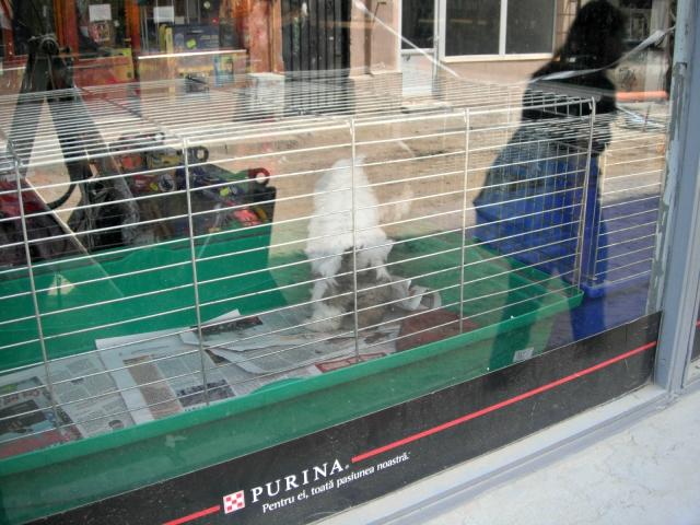 Honden worden verkocht in dierenwinkels, Bucharest, Roemenië