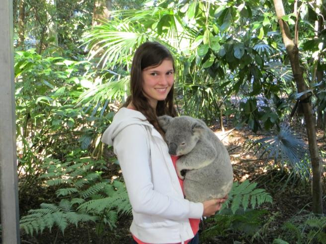 Koala vasthouden/knuffelen in Australië