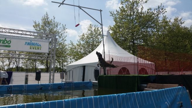 Dock Diving Animal Event 2015